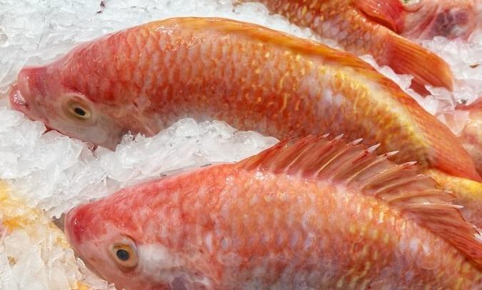 alergia al pescado