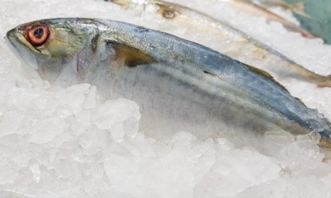 ¿Anisakis en el pescado?