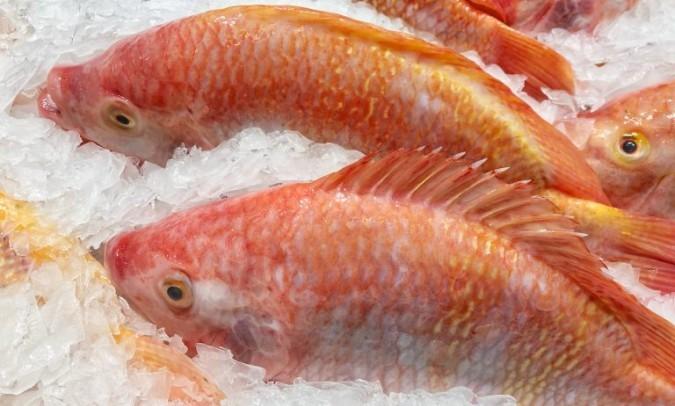 descongelar pescado